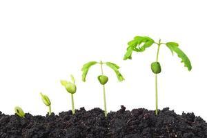 plant seedling