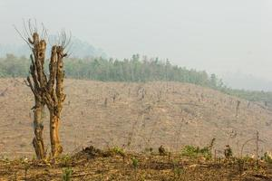 cultivo de tala y quema foto