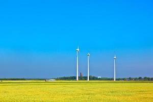 Wind energy wowers standing in the field photo