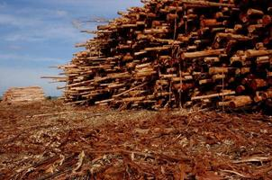 Pile of logs photo