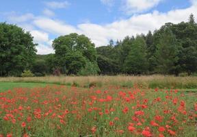 Gardens at Rosemore, Torrington, in Devon, England, UK