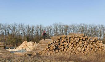Lumber engineer