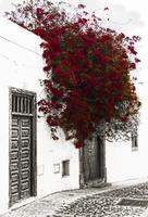 fachada con buganvilla foto