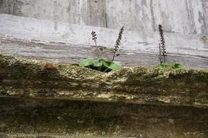 Plants under the window: spontaneous nature photo