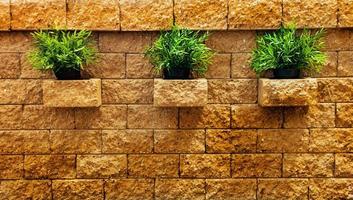 Tres matas de hierba verde en la pared de ladrillo