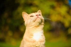 gracioso gato en la hierba verde