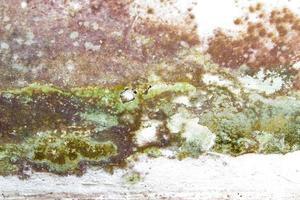muro de hormigón mohoso