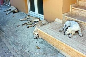 los perros duermen en la calle foto