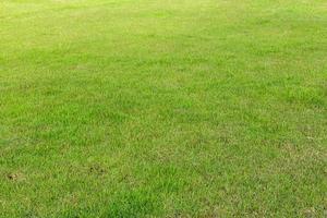 Lawn, garden