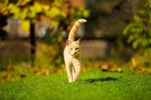Funny cat on green grass photo