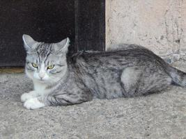 gato está enojado con el fotógrafo foto