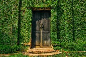 Wall covered with green ivy