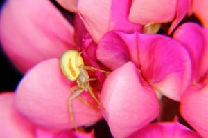 araña. flor. foto