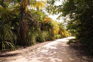 camino de tierra a través de palmeras