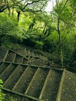 Stairs in the rainforest photo