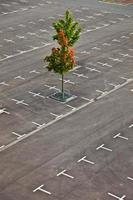 marked parking lot without cars