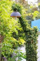 Black lamp hanging green tree