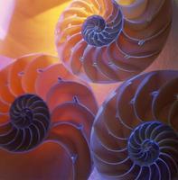 Artistic photo of three nautilus shells