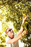 Handsome man picking fruit photo