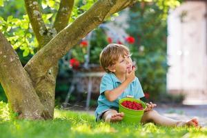 Adorable little preschool boy eating raspberries in home's garde photo