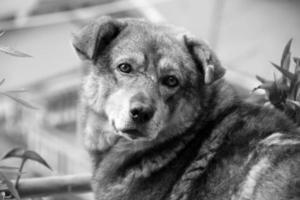 Cute street dog photo