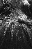 Black and white photo of forest and sky
