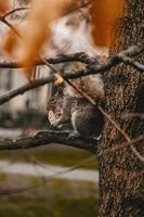 squirrel eating cracker on tree branch