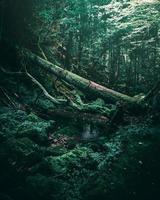 forêt vert foncé photo