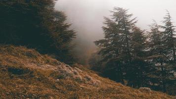 Green pine trees on foggy mountain