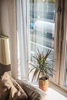 Plant and couch beside window