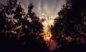 Trees silhouetted by sunrise