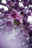 Foto de enfoque selectivo de flores de pétalos de color púrpura