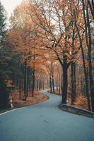 Brown trees on gray concrete road
