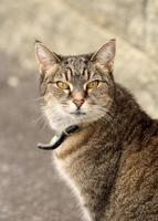 Tabby cat on path