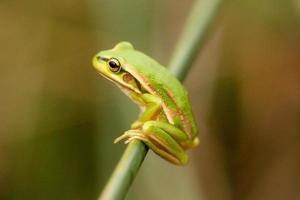 Green frog on stalk