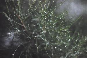 waterdruppels op een boom