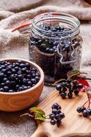 chokeberry negro.