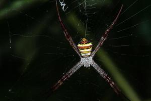 araña en la web