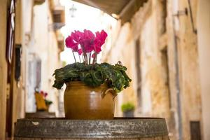 Pink flowers in old town photo