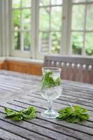 Mojito with mint