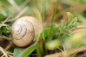 snails in the grass photo