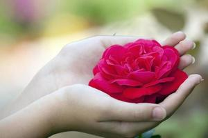 Rose in affectionate hands.