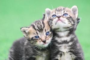 gatitos tiernos photo