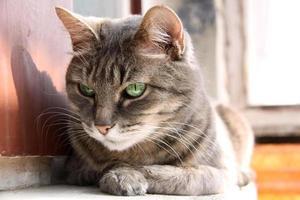 mirada inteligente gato de ojos verdes
