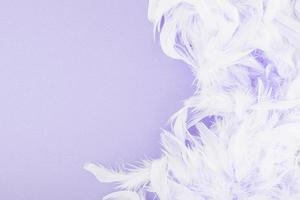 Purple background with feathers