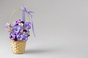 Viola flowers photo