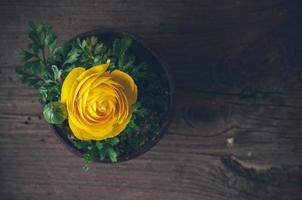flores ranúnculos foto