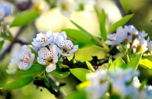 ramas de primavera verde foto