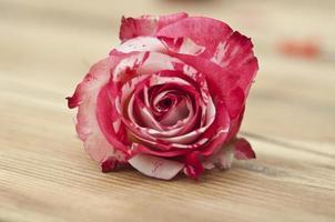 hermosa rosa sobre fondo de madera foto