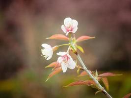 Pastel tones Spring Cherry blossoms sky photo